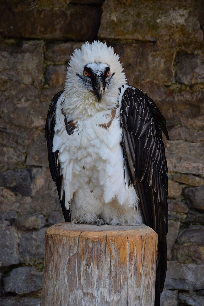 adler raptor bird of prey free photo