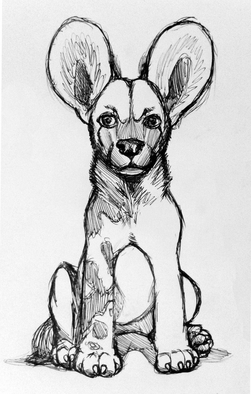 African wild dog drawing draft free picture