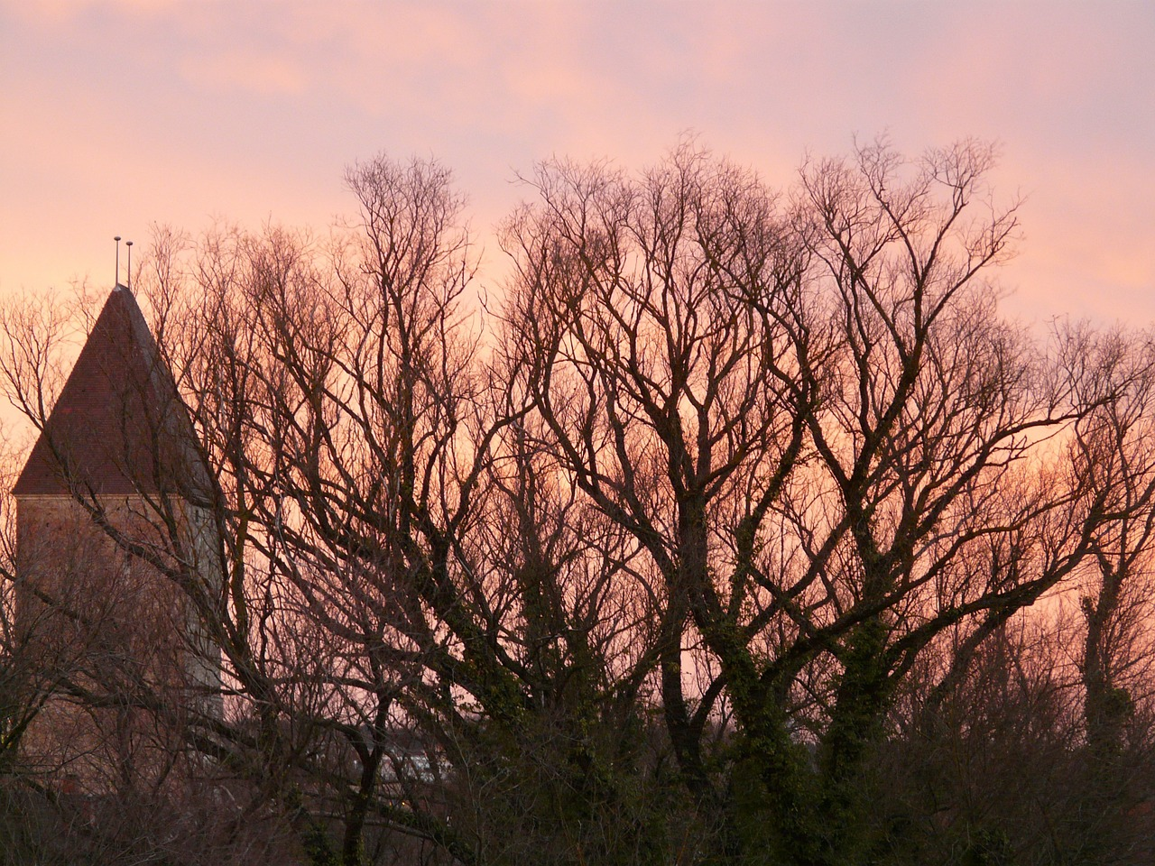 afterglow trees branches free photo