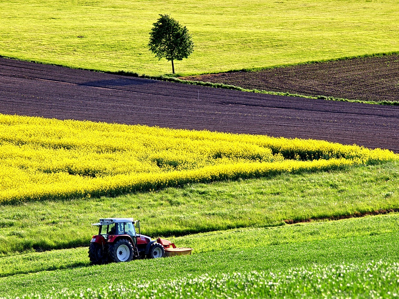 agriculture field of rapeseeds field free photo