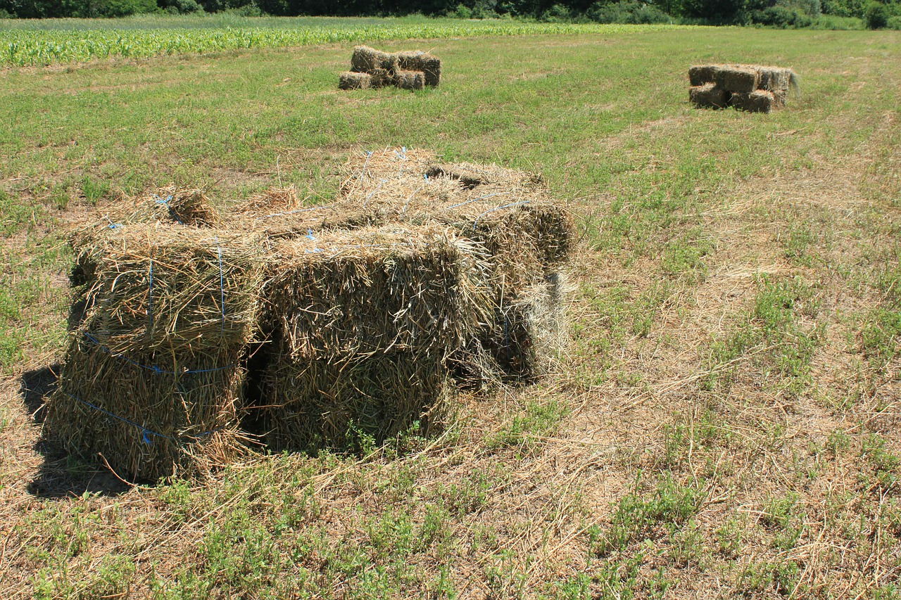 agriculture alfalfa bales free photo