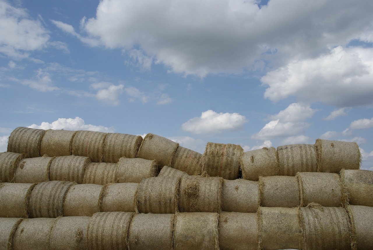 agriculture straw hay free photo