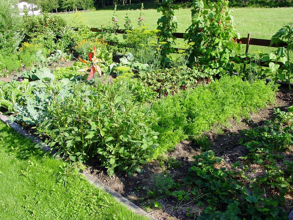 allotment garden beete free photo