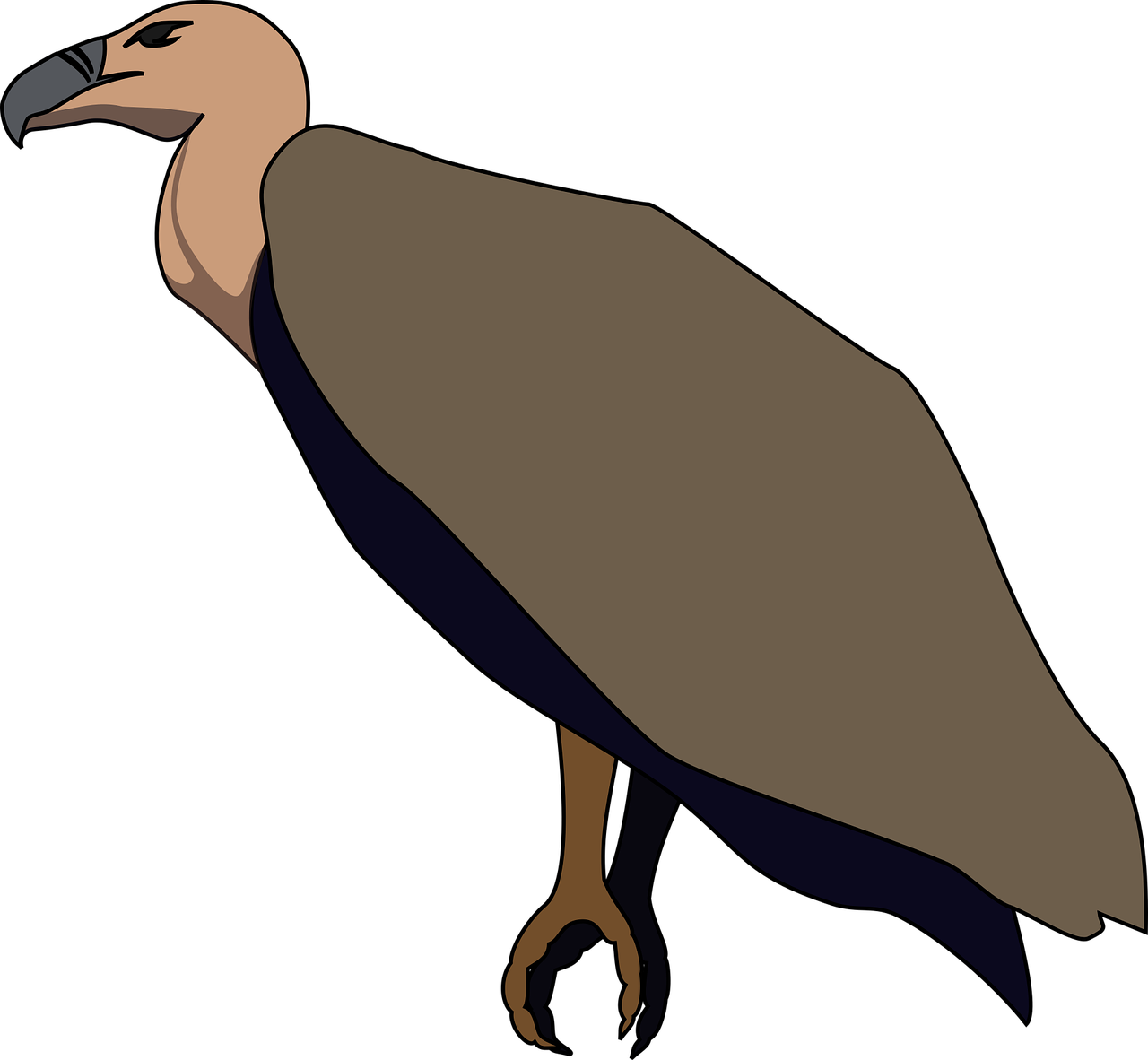 Download Free Photo Of Alphabet Word Images Carrion Scavenger Vulture Wildlife From Needpix Com