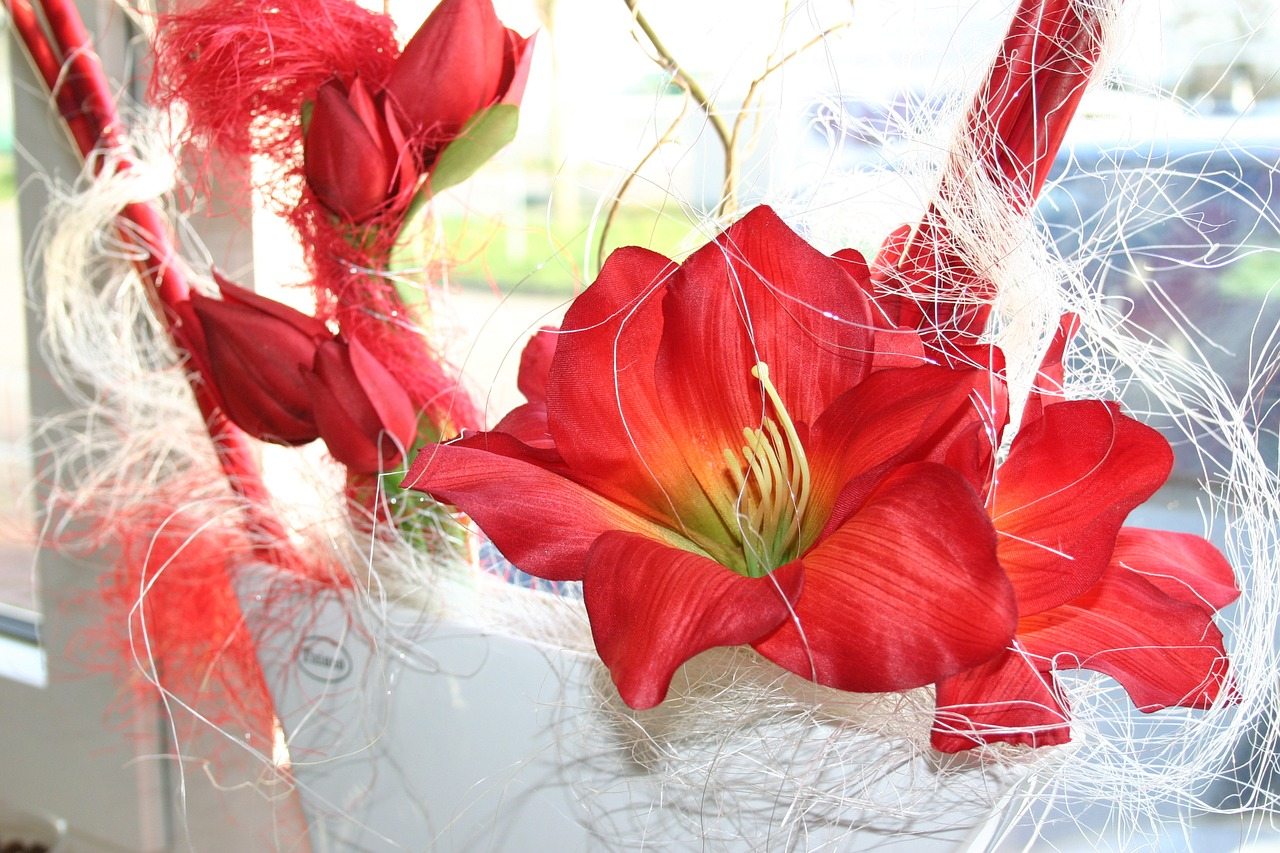 amaryllis flower red free photo