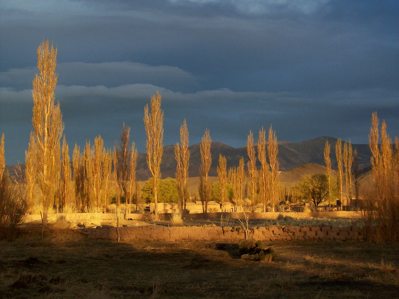 andean landscape argentina tree free photo