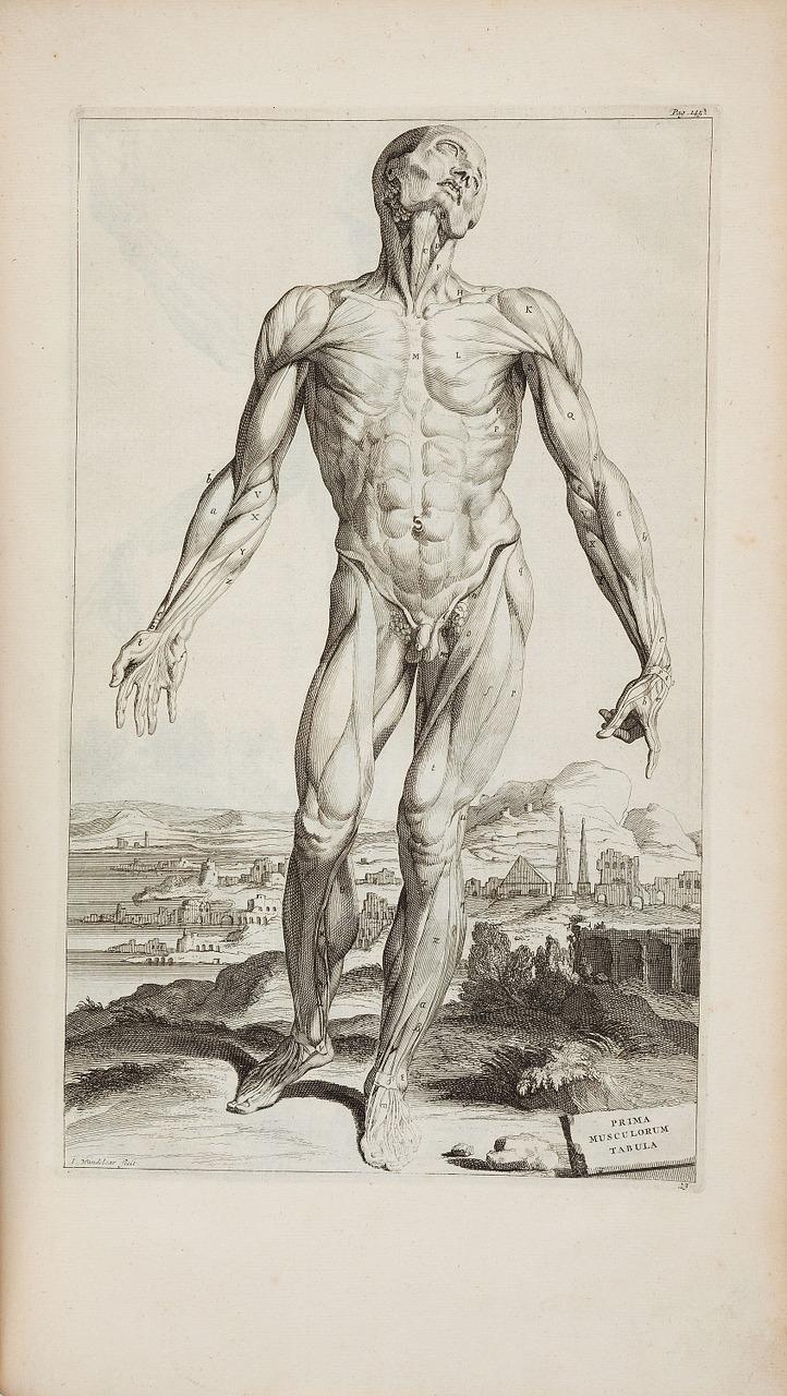 Andreas Vesalius1725opera Omnia Anatomica Chirurgicahuman Anatomy