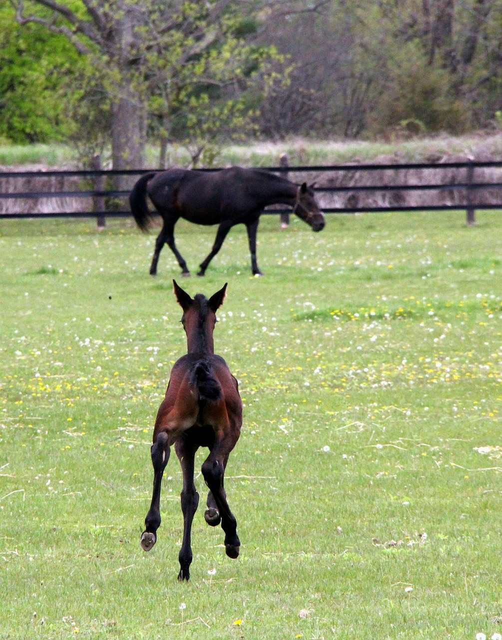 animal horse foal free photo