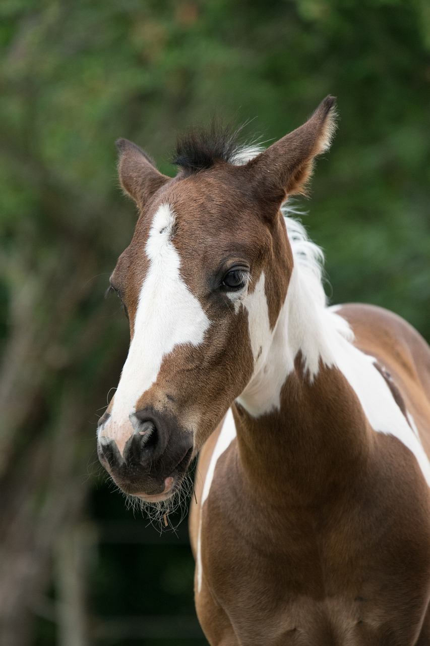 Animal, horse, foal, young, small   free image from needpix.com