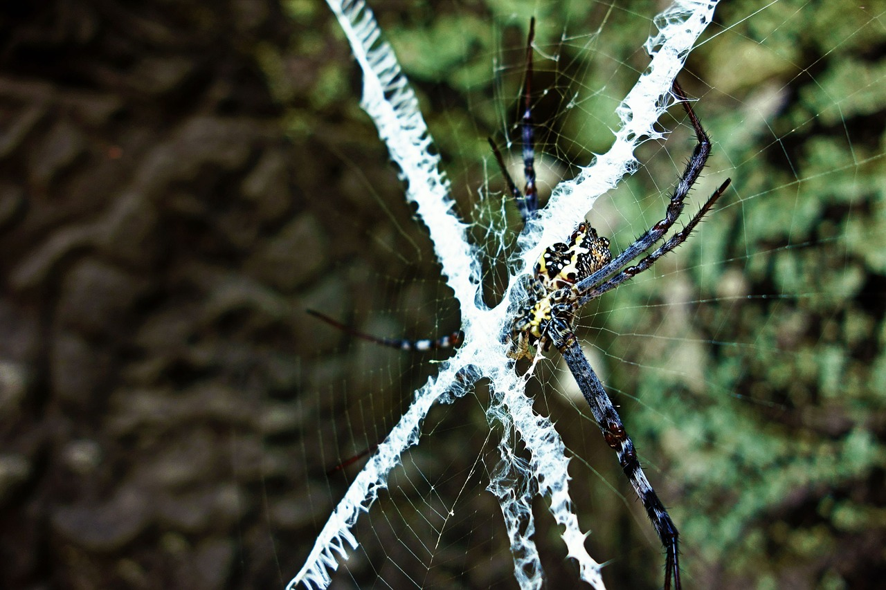 animal spider web free photo