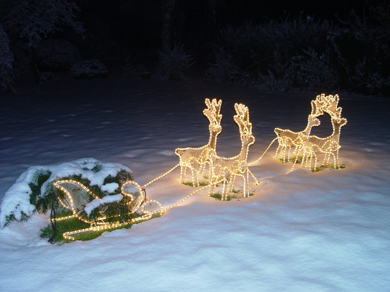 animal racing sled at night illuminated free photo