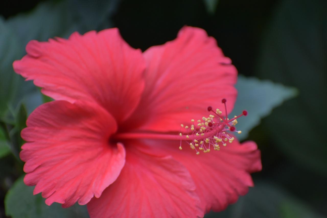 Antherstamensparts of flowerfilamentfree pictures free photo anther stamens parts of flower izmirmasajfo
