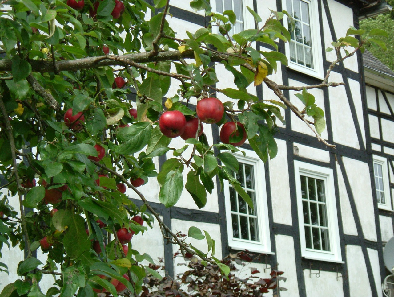 apple fachwerkhaus tree free photo
