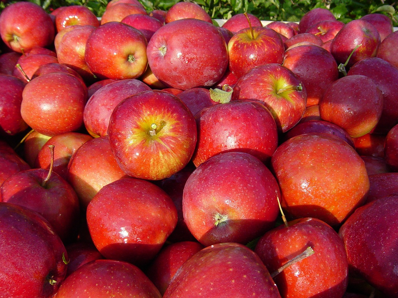 apple variety red prince fresh crop free photo
