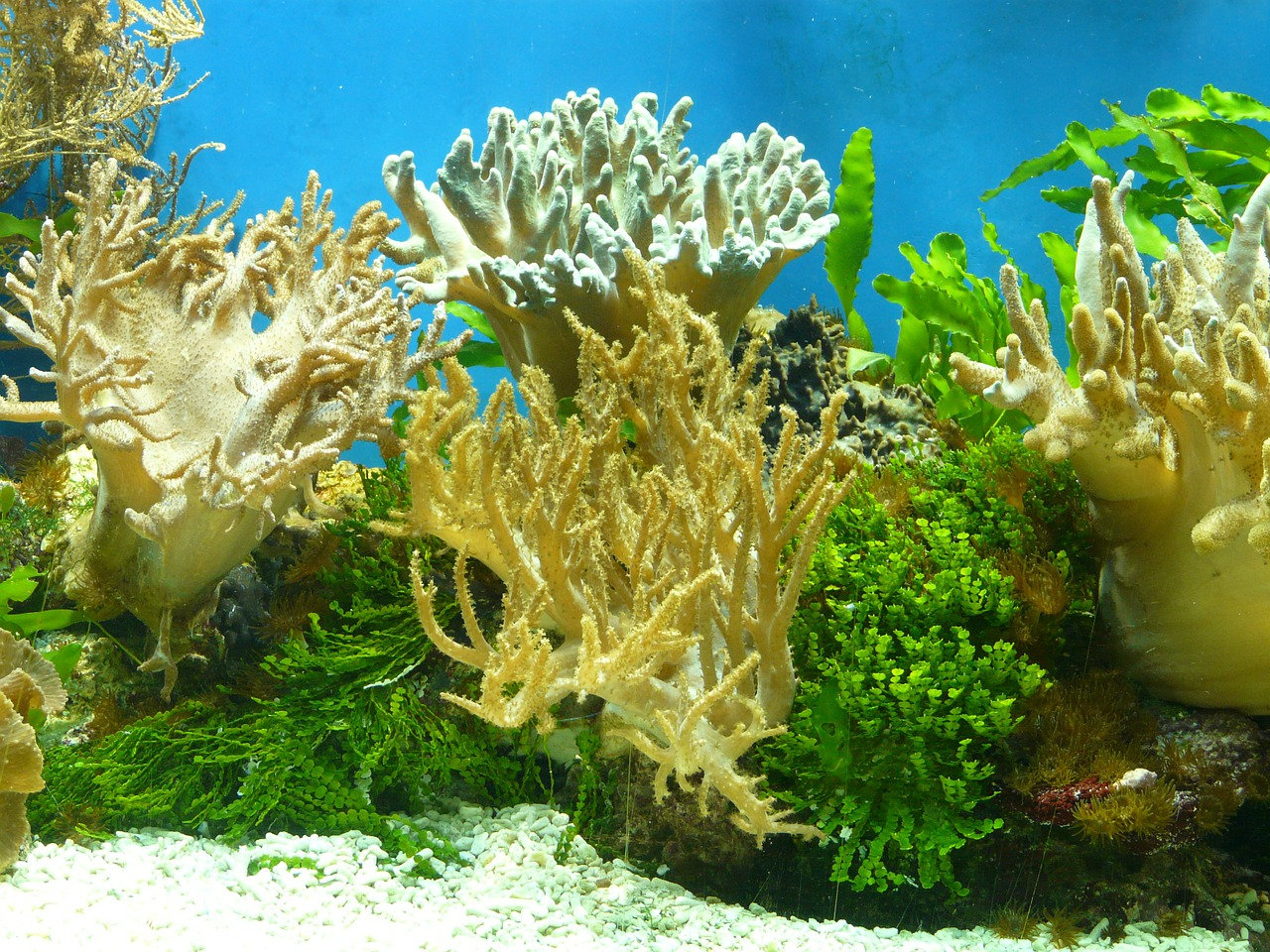 aquarium coral water free photo