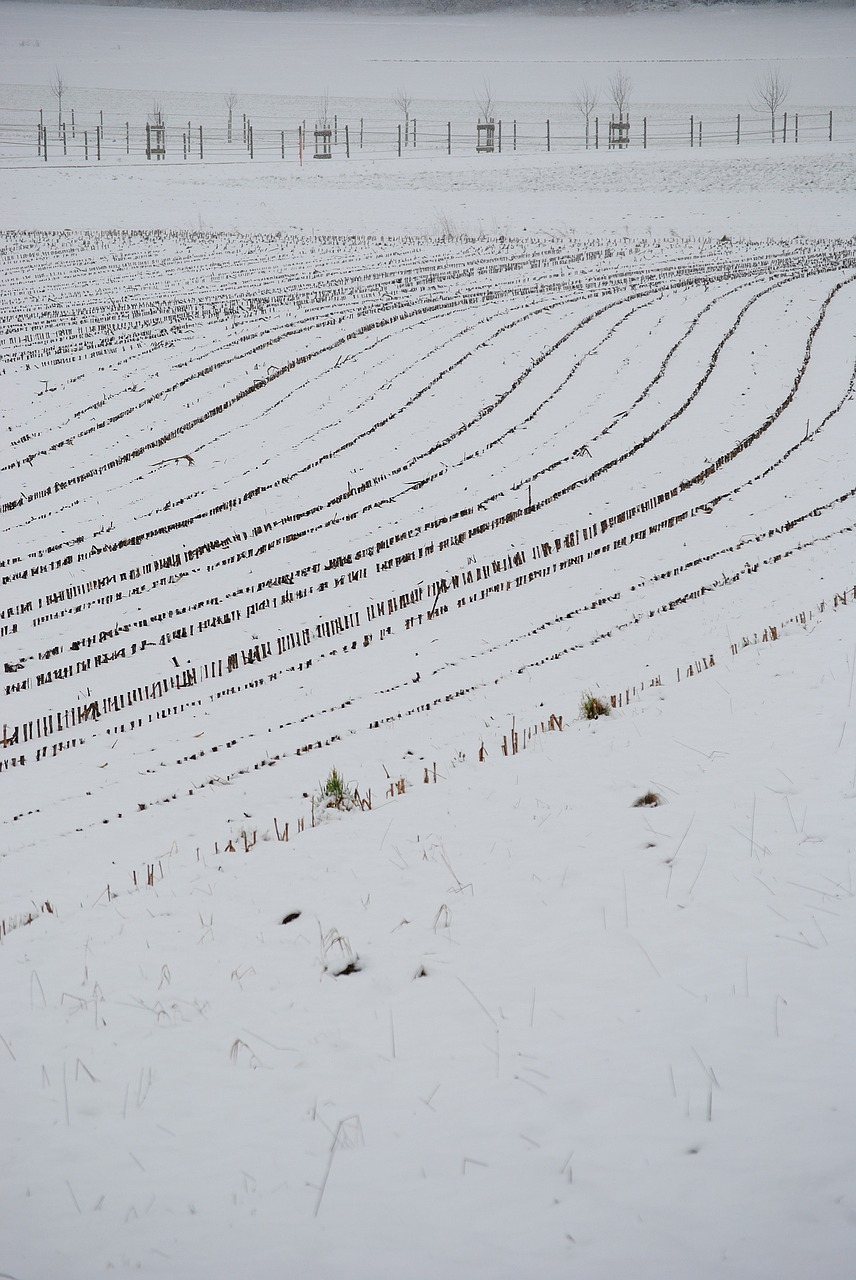 arable,snow,lines,wintry,snowy,corn,glean,free pictures, free photos, free images, royalty free, free illustrations, public domain