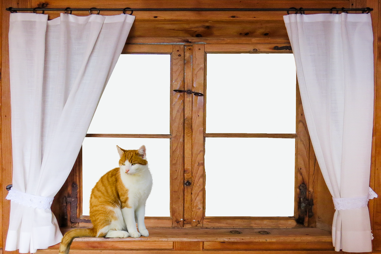 Architecture Window Outlook Curtain Wooden Windows Cat Isolated Free