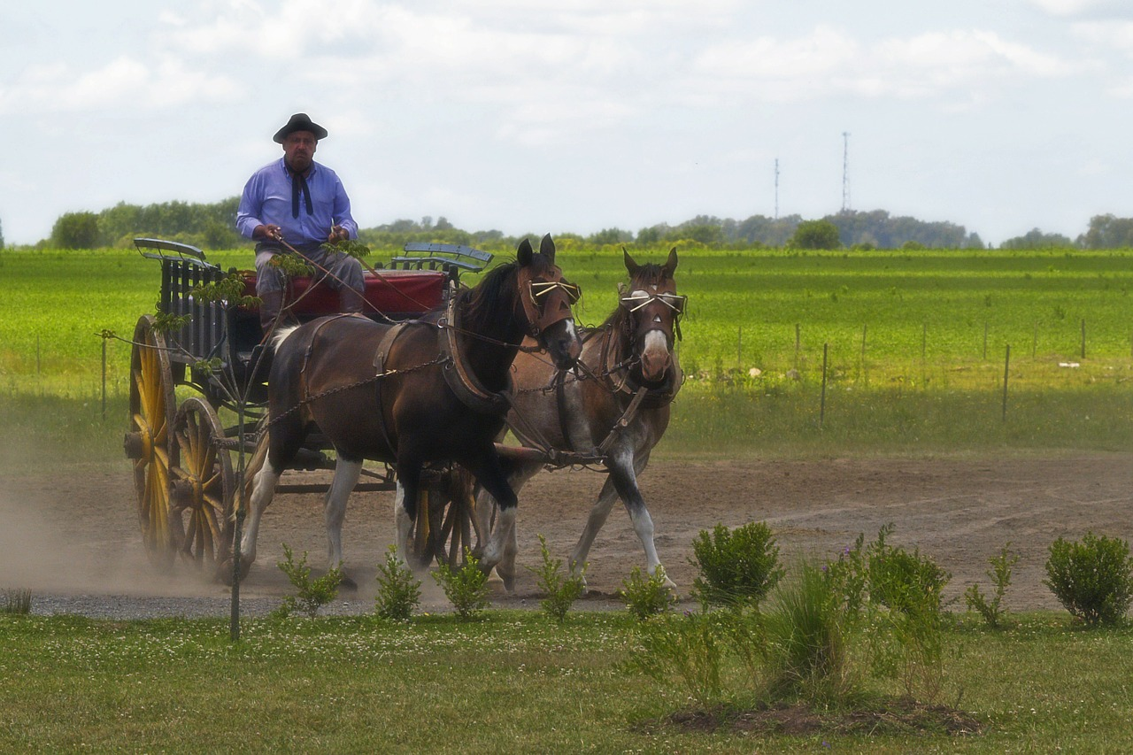 argentina gaucho horses free photo