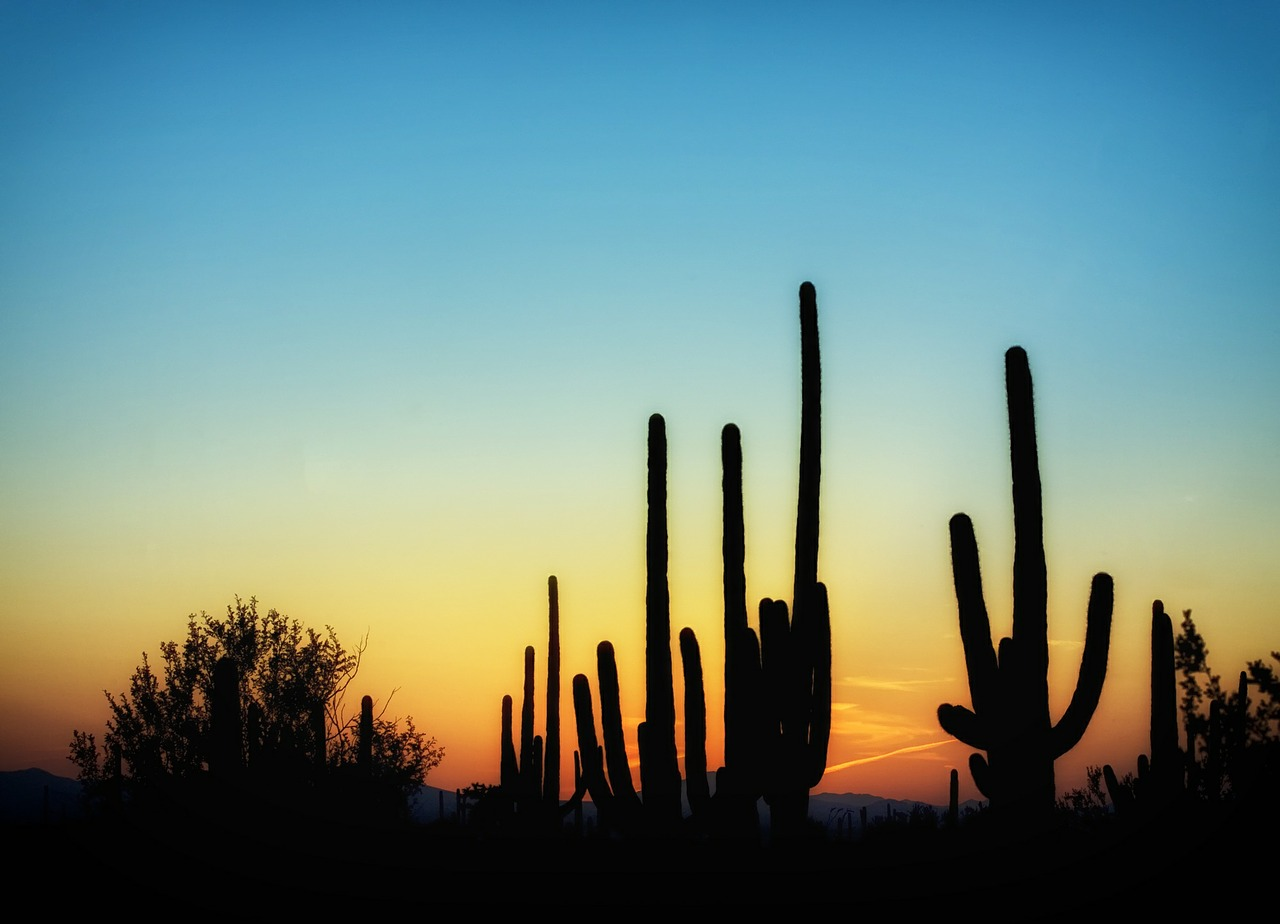 arizona cactus cacti free photo