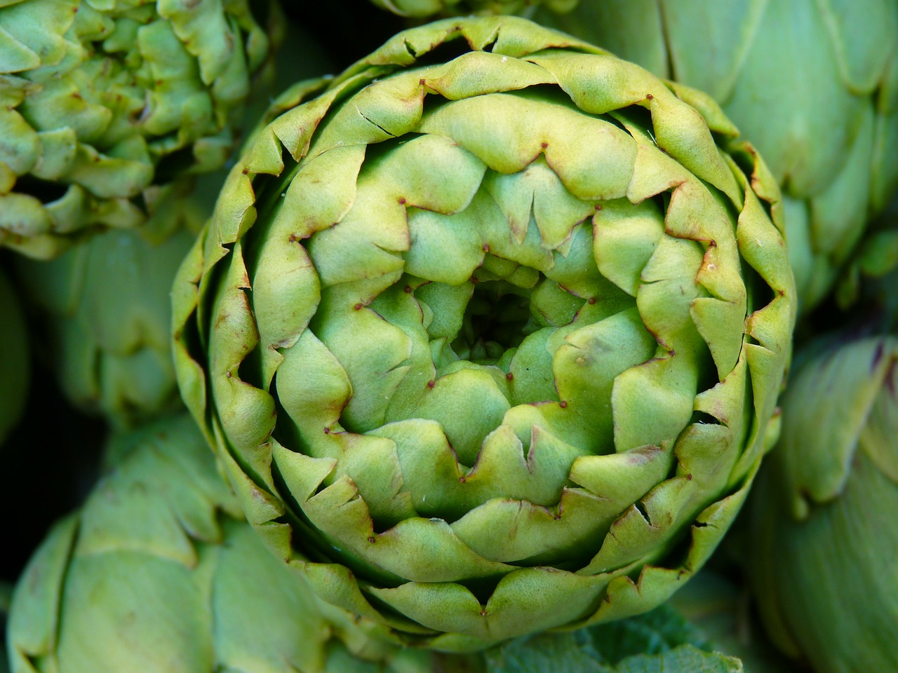 artichoke vegetables green free photo