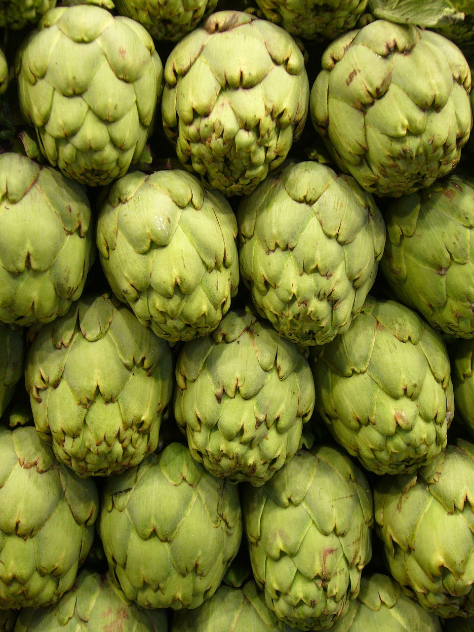artichokes vegetables green free photo