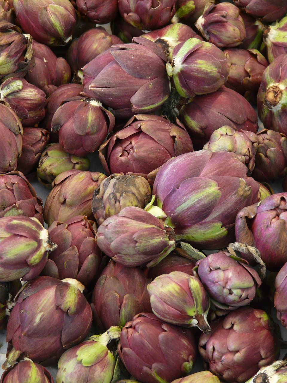 artichokes vegetables medicinal plant free photo