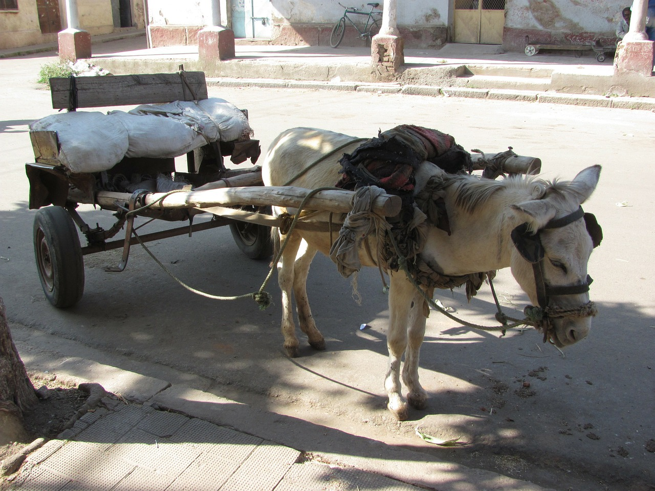 asmara eritrea donkey free photo