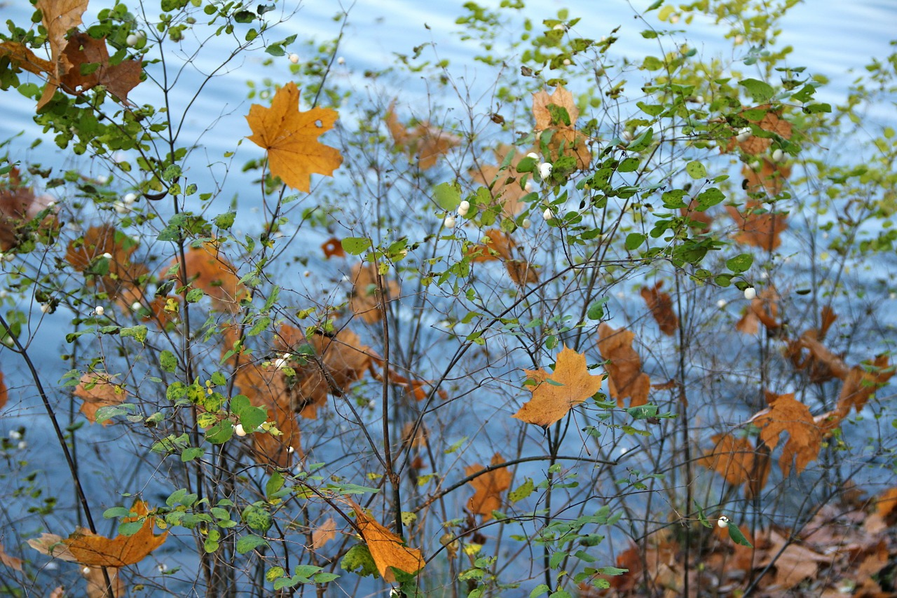 autumn bush leaves free photo