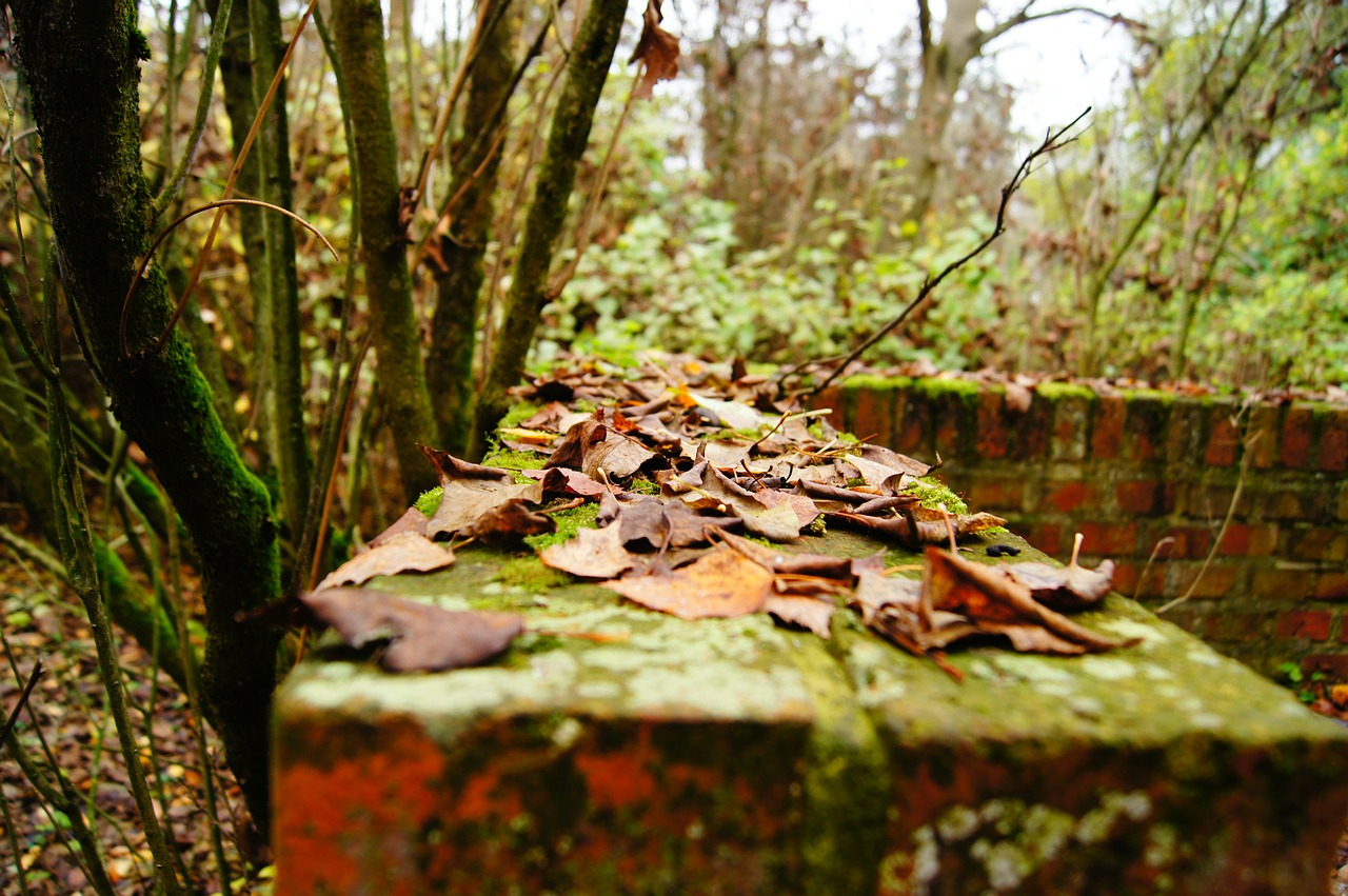 autumn,wall,leaves,nature,free pictures, free photos, free images, royalty free, free illustrations, public domain