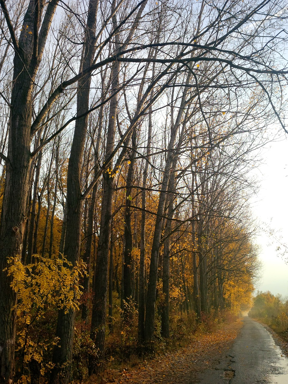 autumn woods roads free photo