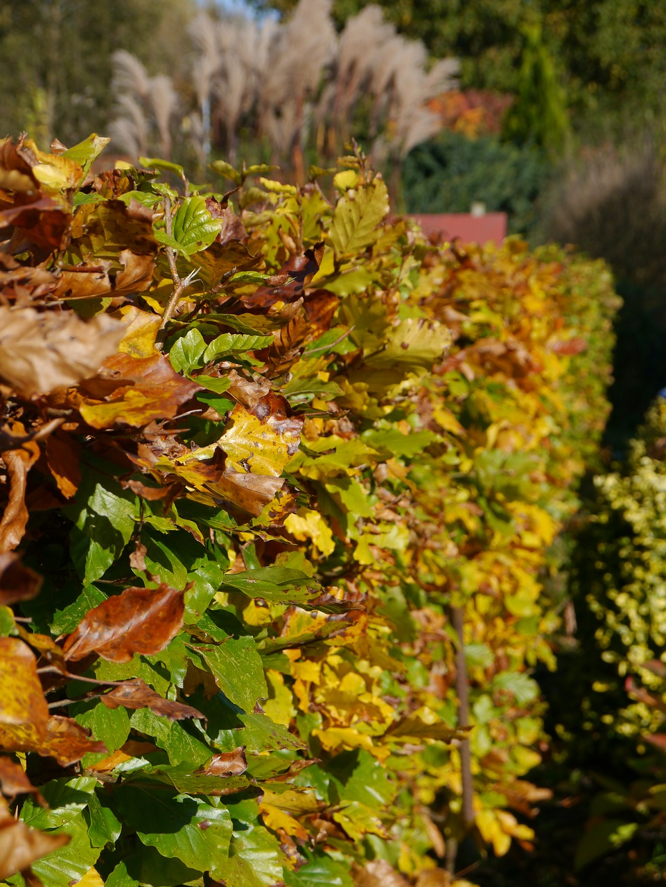 Autumn,hedge,hedge accounting,garden,golden autumn - free photo from ...