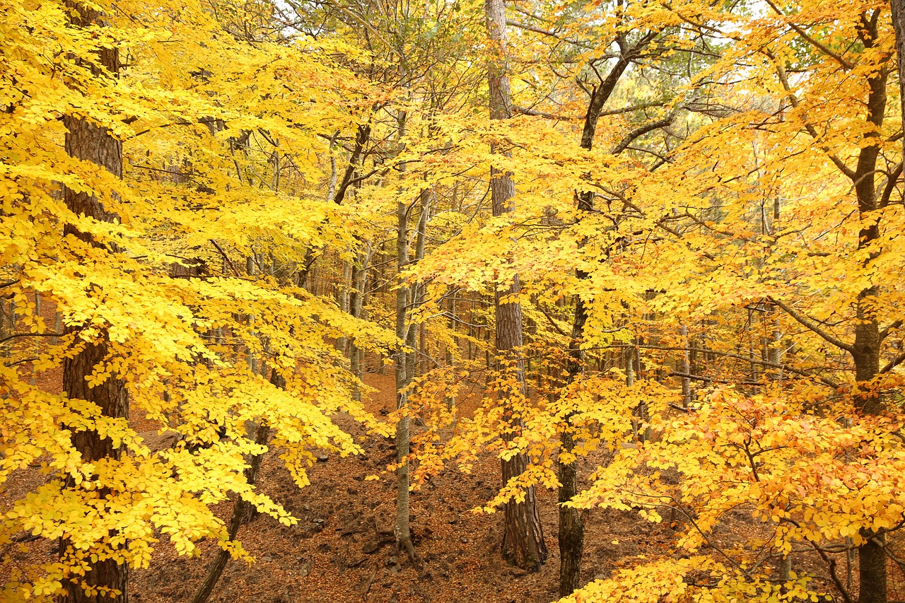 Autumn Leaves Trees Nature Fall Free Image From Needpix Com