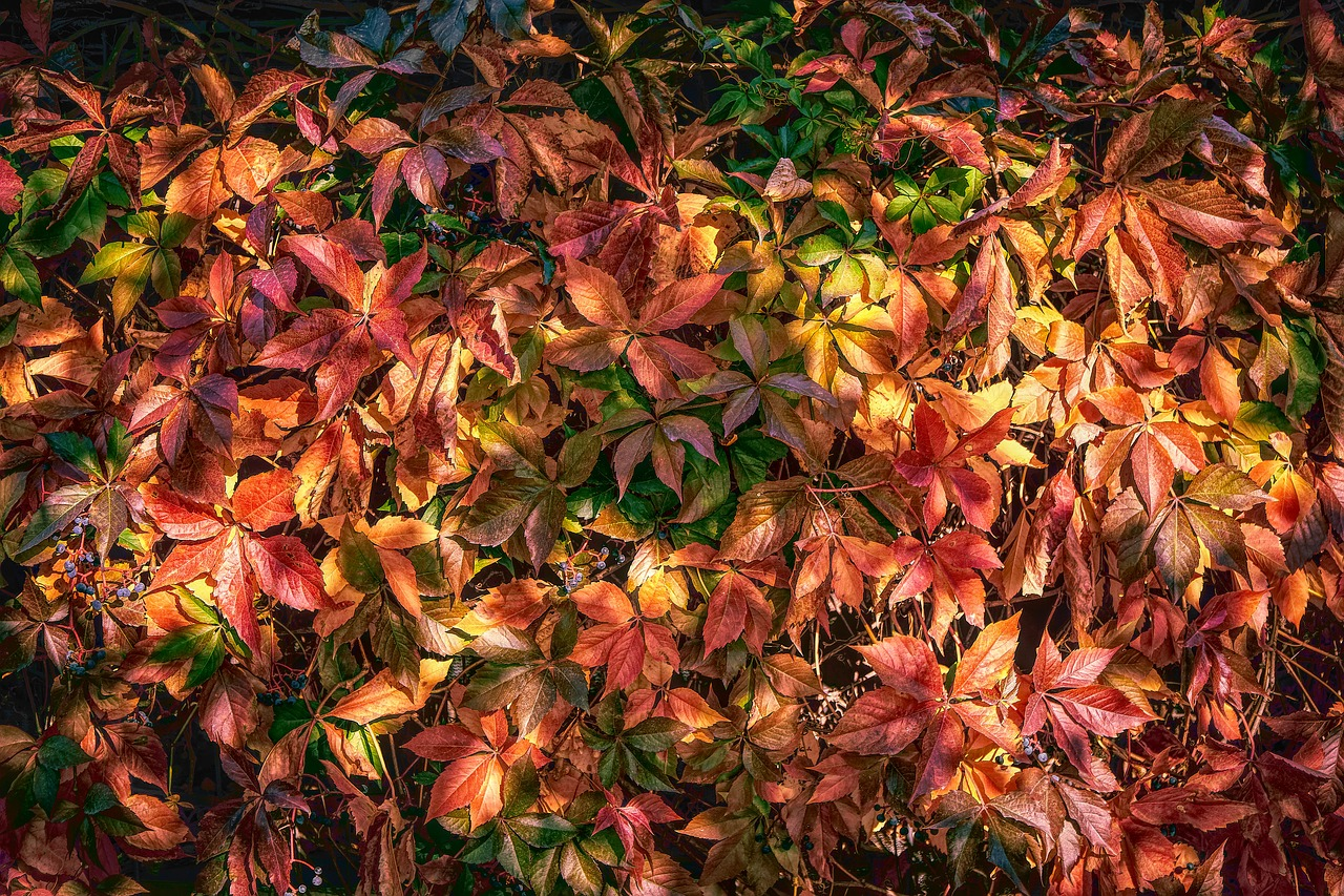 autumn  leaves  color free photo