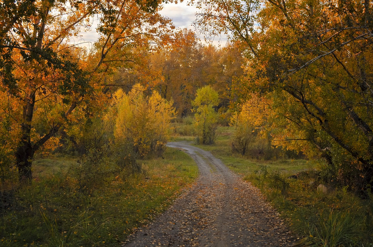 autumn road forest free photo