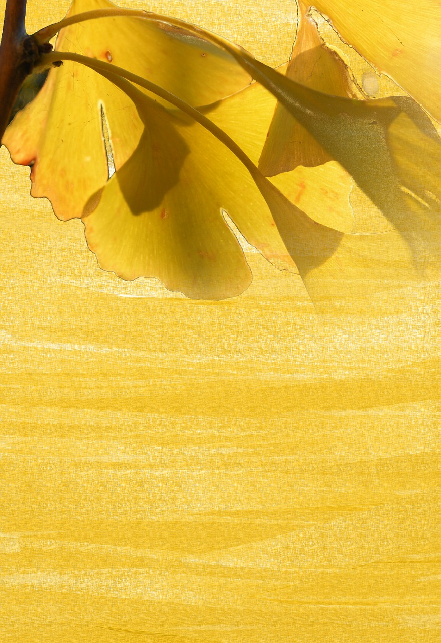 autumn gingko leaves stationery background free photo from
