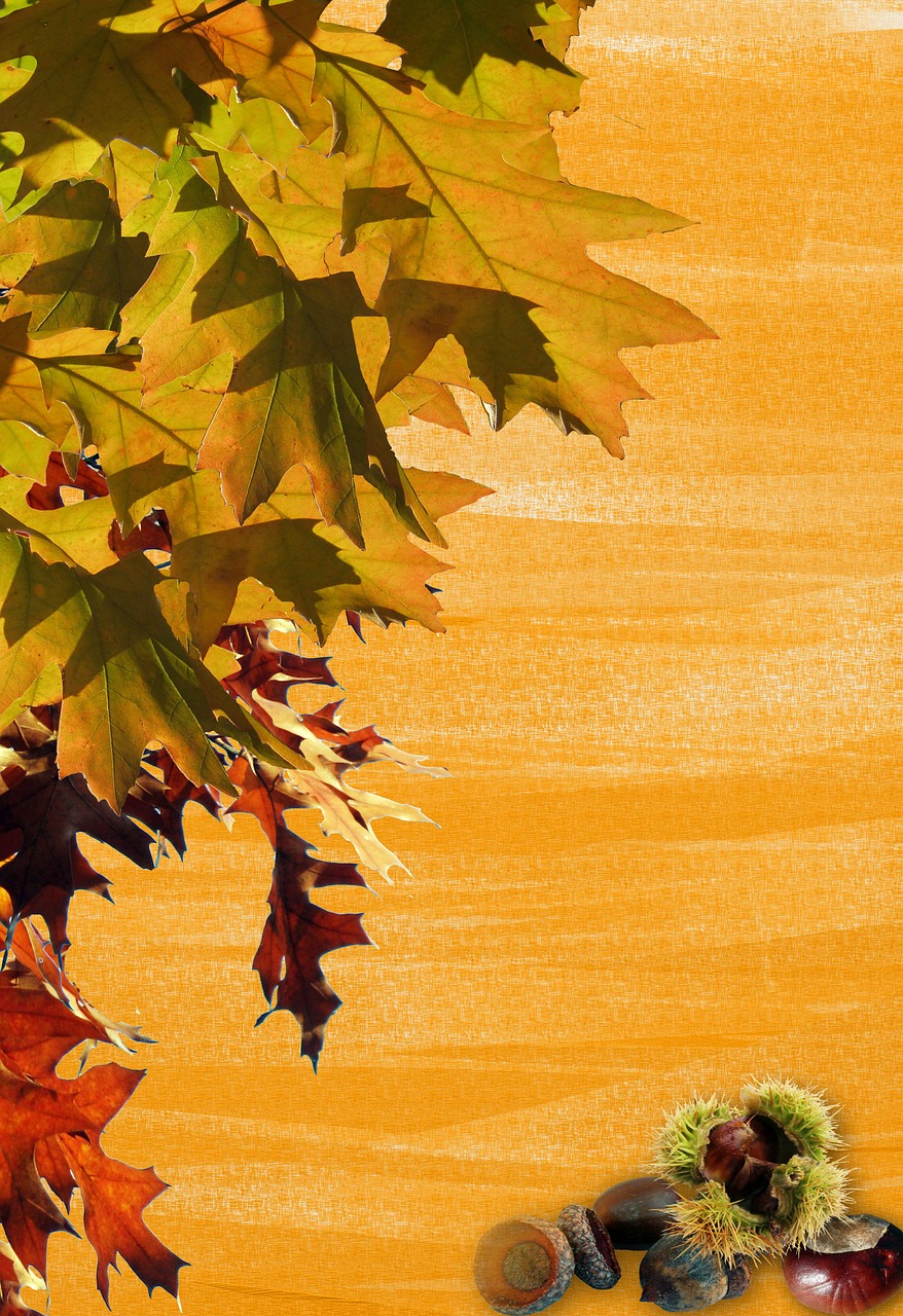 autumn leaves stationery free photo
