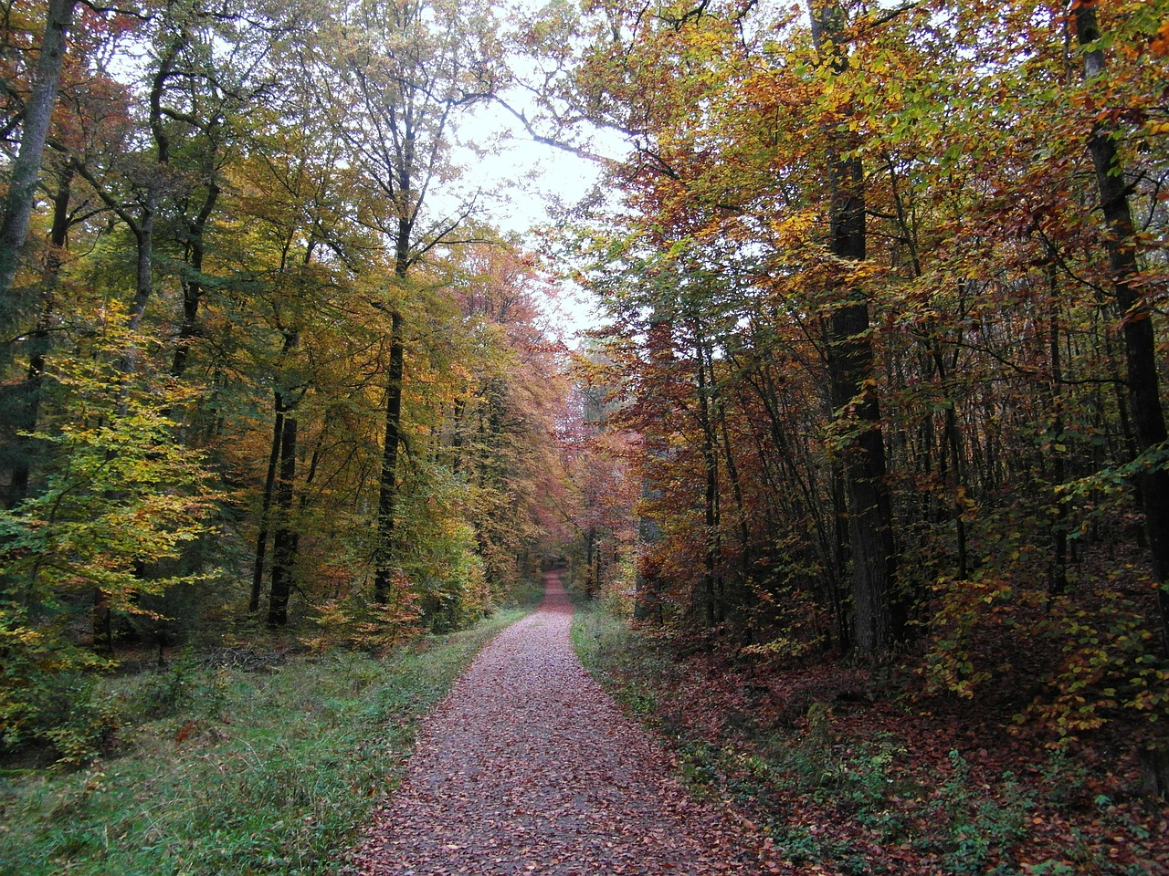 away forest path autumn free photo