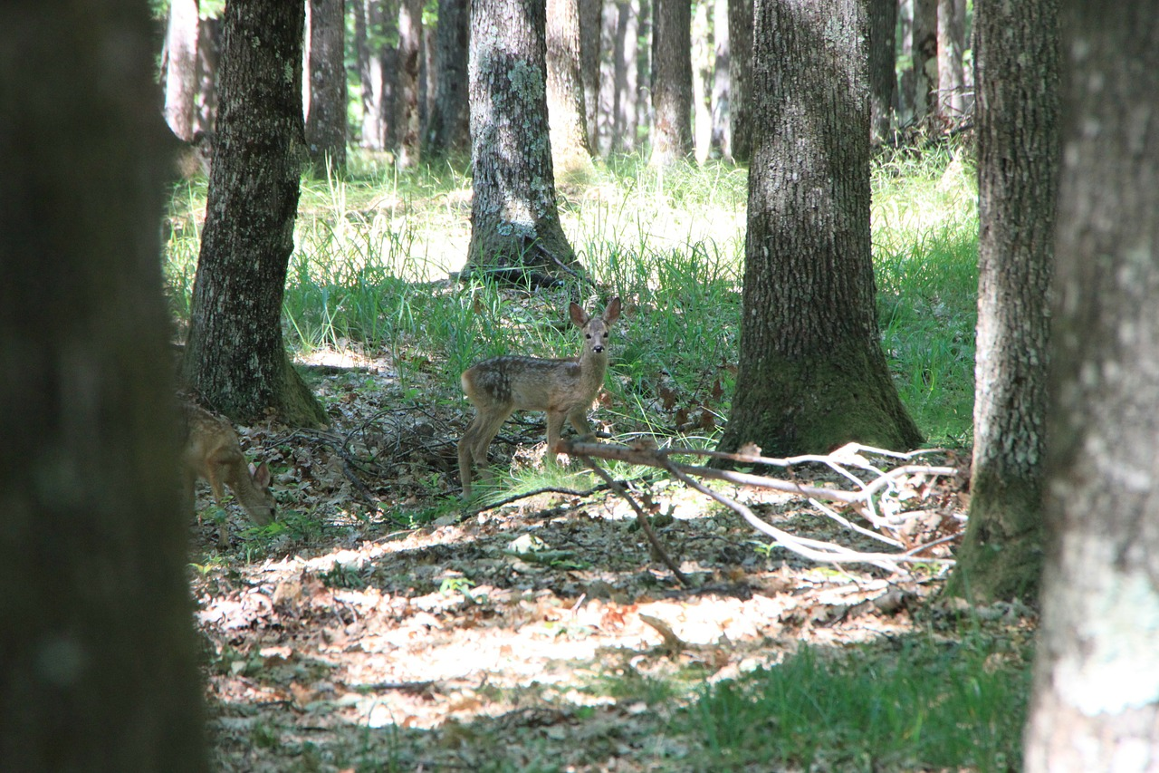baby deer forest free photo