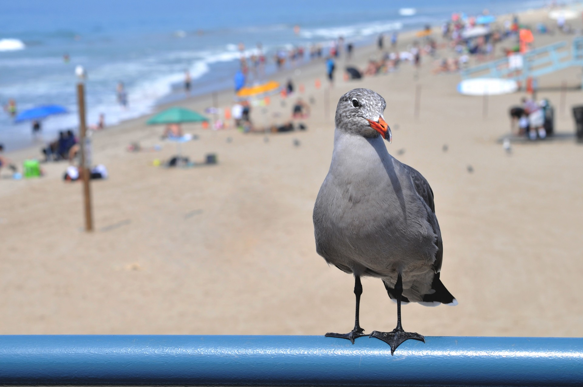 Seagull,sea gull,bird,beach,ocean - free photo from needpix com
