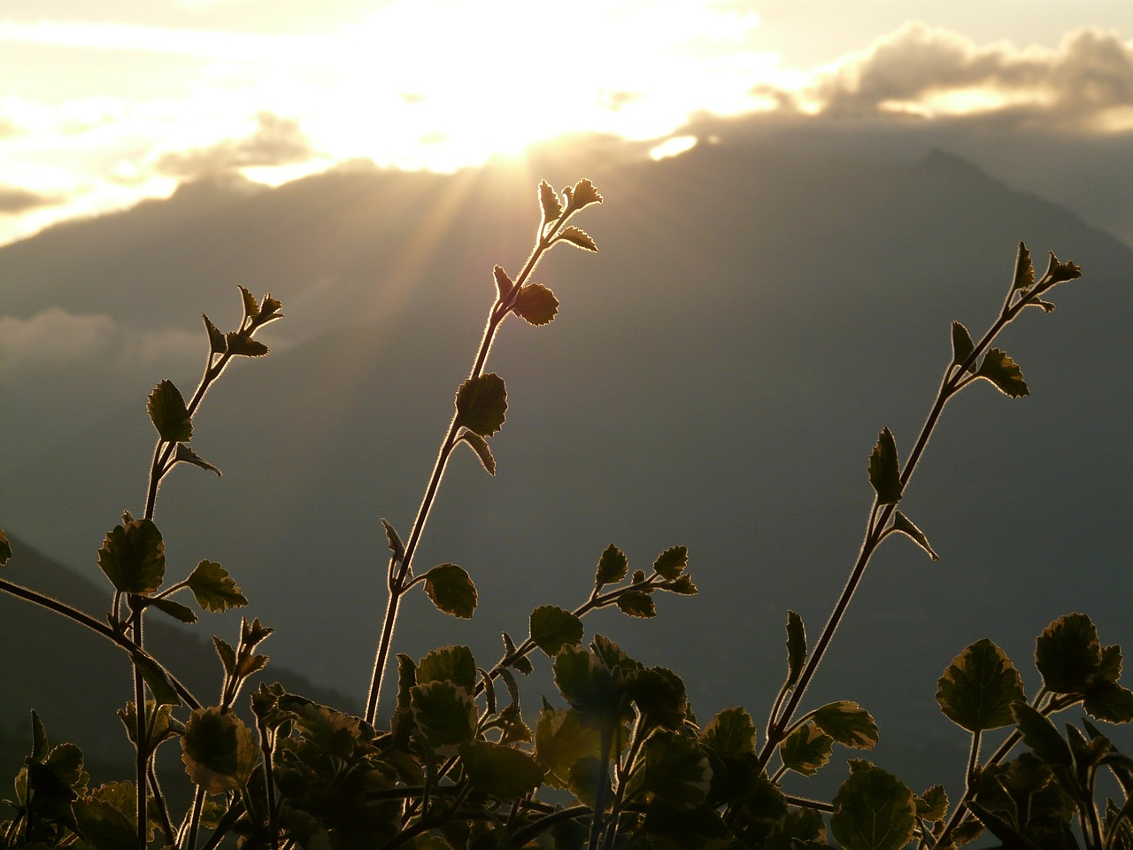 back light mountain plant free photo