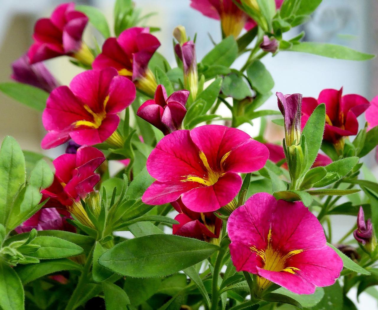 Balcony,flowers,balcony plant,nature,summer - free photo from ...