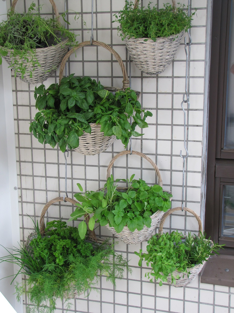 balcony,herbs,verkikaalipuutarha,vertical planting,planting baskets,wall garden,herb,basil,thyme,lavender,melissa,parsley,dill,chives,free pictures, free photos, free images, royalty free, free illustrations, public domain