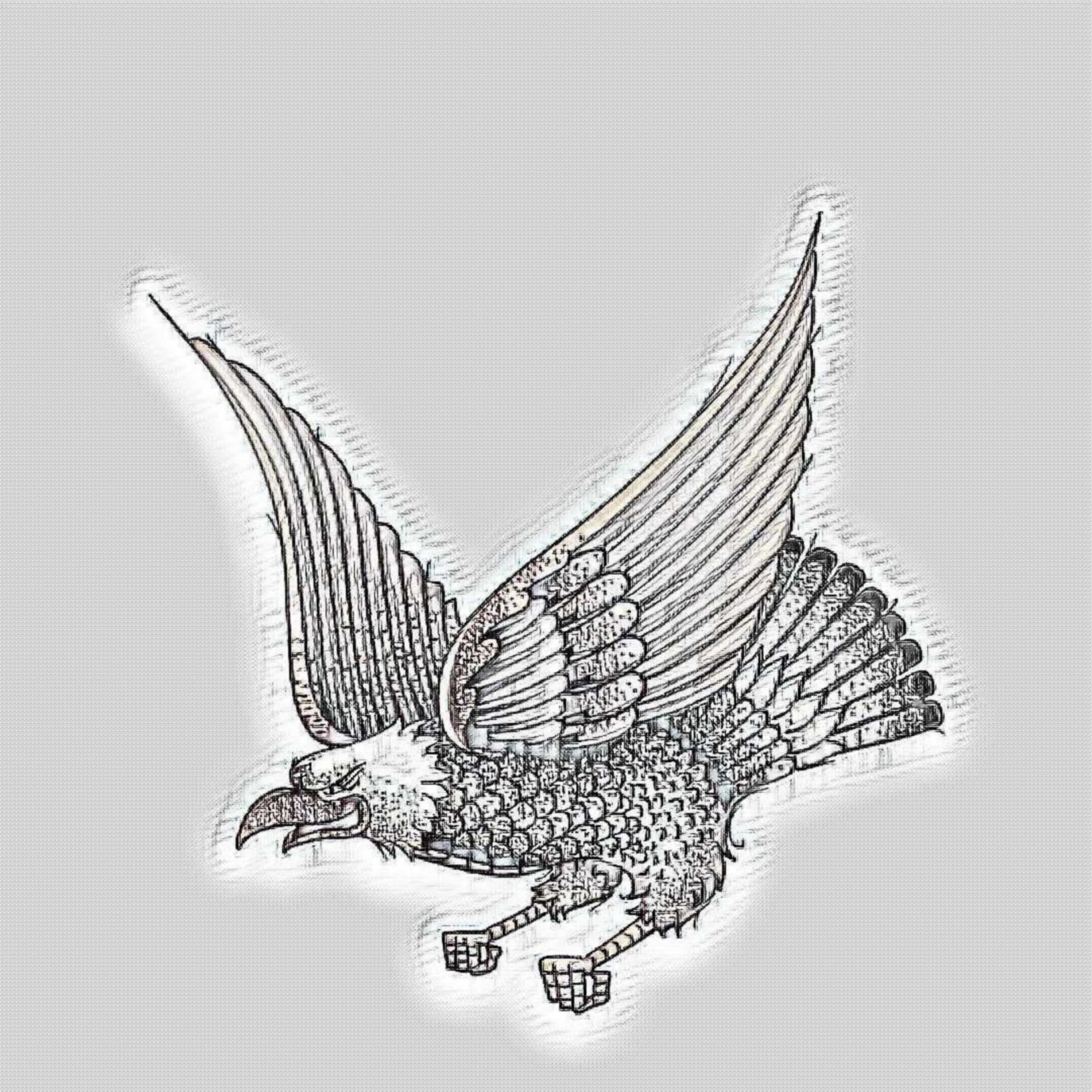 Bald eagle pencil free picture