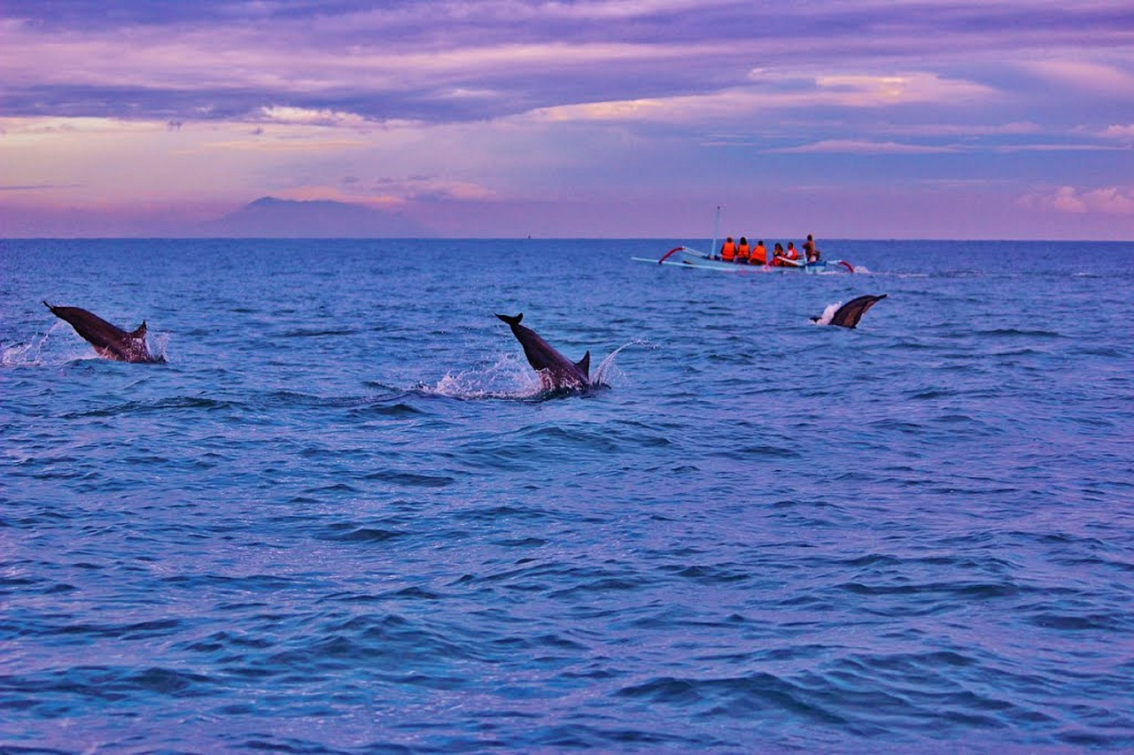 bali dolphins sunrise free picture