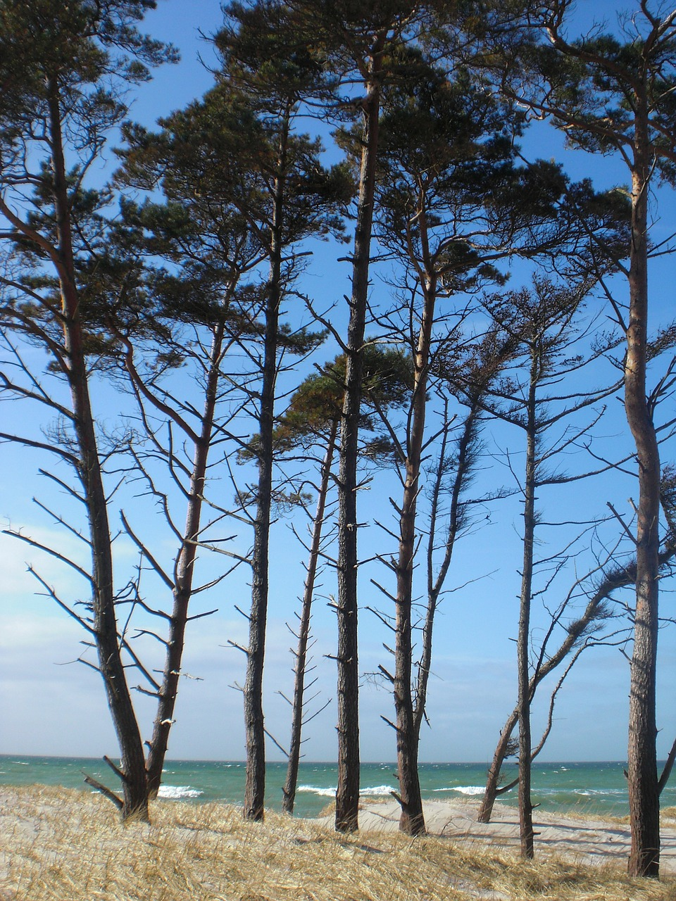 baltic sea beach trees free photo