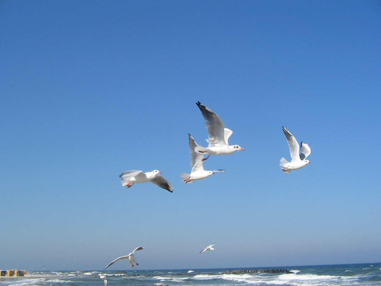 baltic sea seagulls sea free photo
