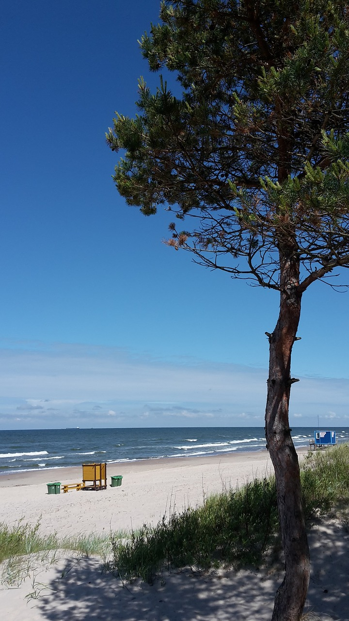 baltika,beach,lithuania,palanga,pine,sand,free pictures, free photos, free images, royalty free, free illustrations
