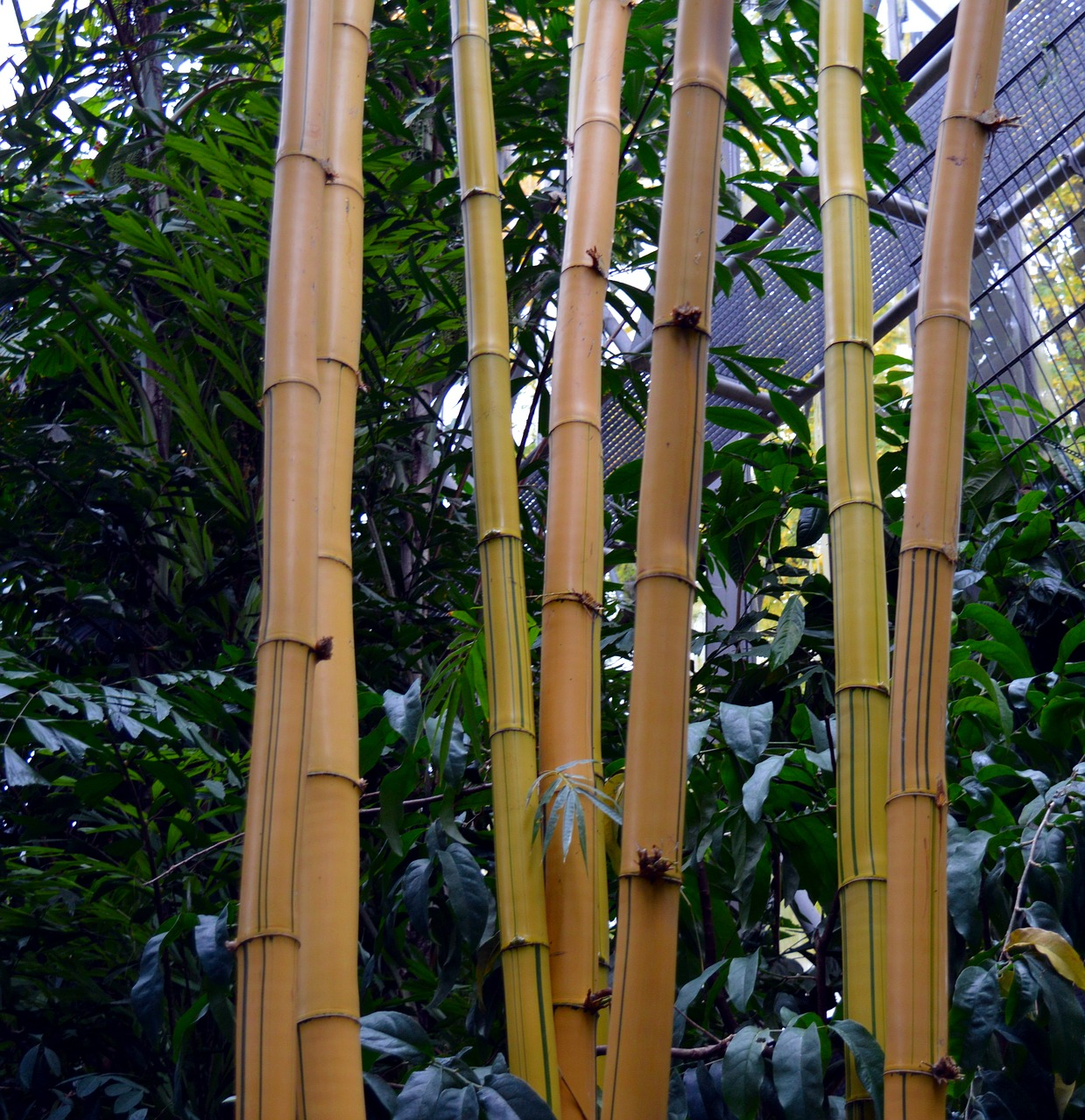 bamboo tropical bamboo plants free photo