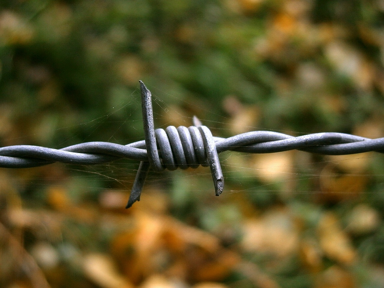 barbed wire wire cobweb free photo