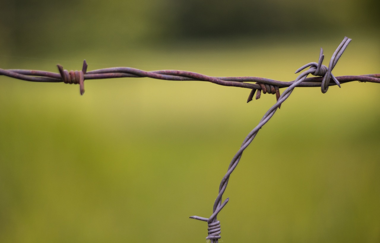 barbed wire wire fence free photo